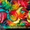 رزهای رنگینکمانی اختراع زوج ابهری + عکس