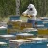 تولید عسل در زنجان افزایش می یابد