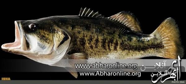 http://AbharOnline.org/wp-content/uploads/2013/05/82-58.jpg
