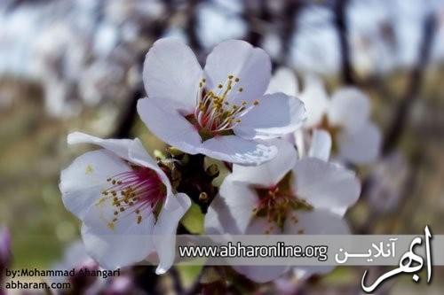 http://AbharOnline.org/wp-content/uploads/2013/05/phoca_thumb_l_img_11331.jpg
