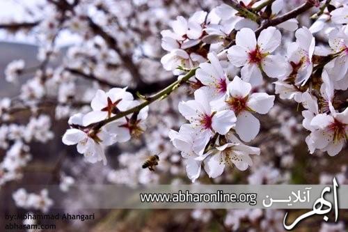 http://AbharOnline.org/wp-content/uploads/2013/05/phoca_thumb_l_img_12161.jpg