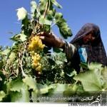 برنامهی اقتصادی دکتر محسن رضایی برای ابهر
