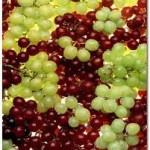 برداشت 120 هزار تن انگور از باغات ابهر