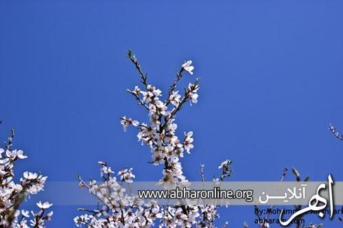http://AbharOnline.org/wp-content/uploads/2013/05/phoca_thumb_l_img_1108.jpg